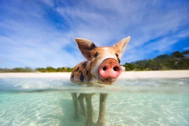 Pigs Beach
