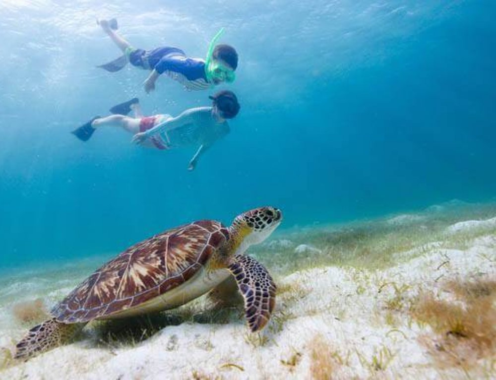 If you Love the Ocean – Here are 3 Souvenirs You Never Should Buy!
