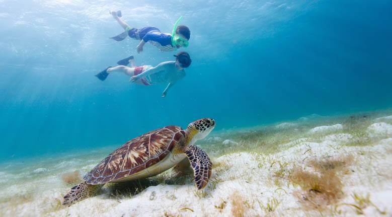 Sea Turtle Snorkel