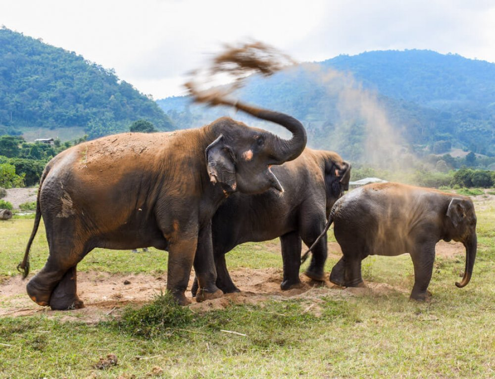 Why You Never Should Support Elephant Riding