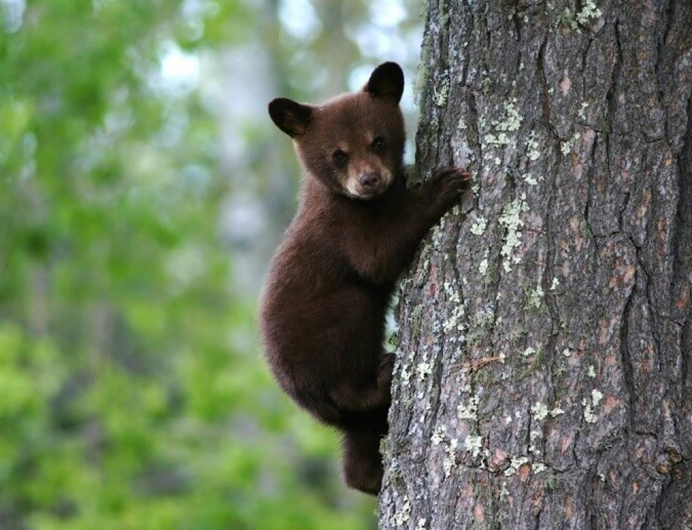 Animal Cruelty towards Bear Cubs in Ksamil – Albania
