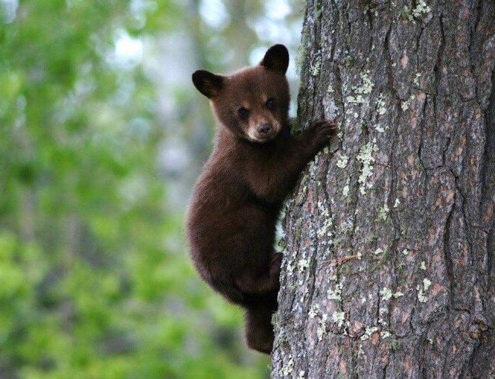 Animal Cruelty towards Bear Cubs in Ksamil – Albania