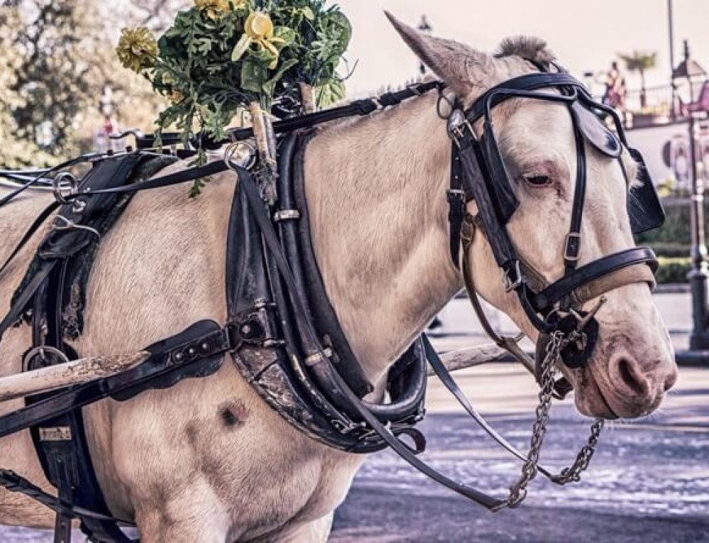 Why you Never Should Go for a Horse Carriage Ride