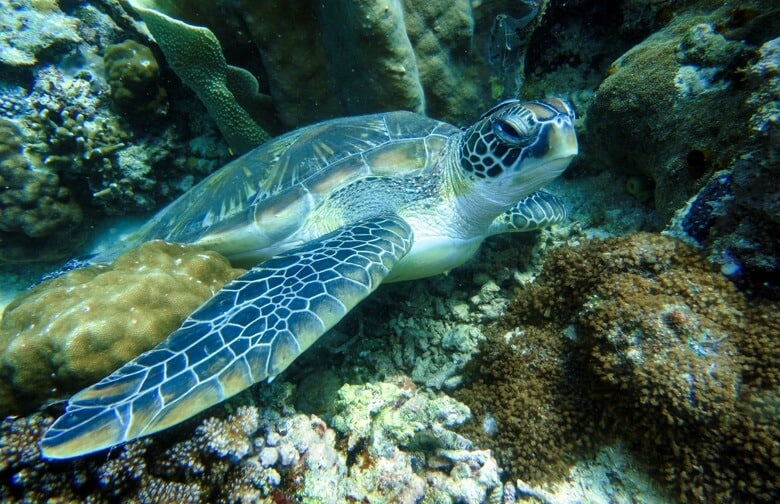 philippines sea turtle