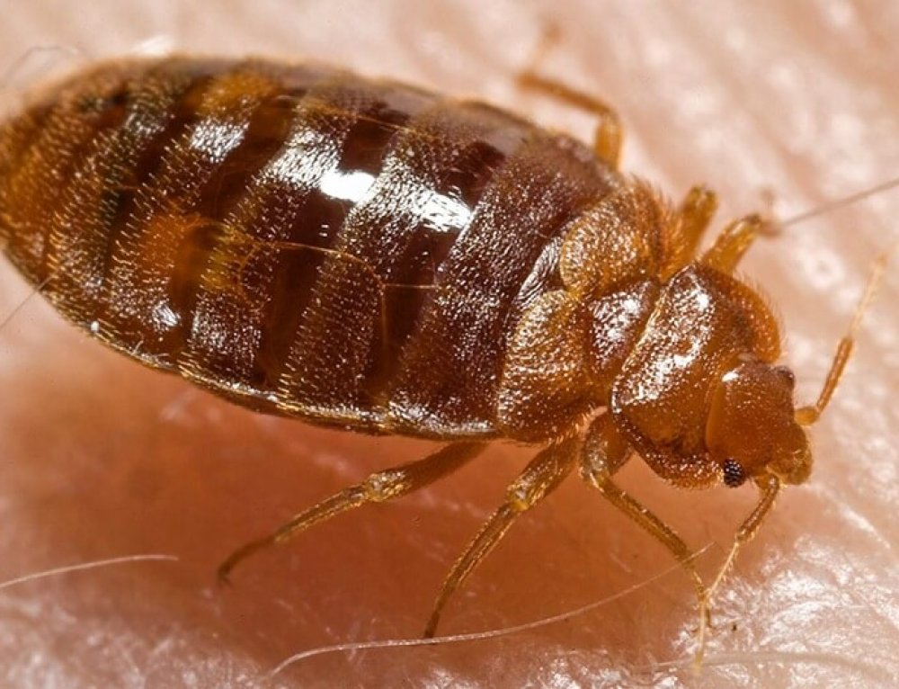 My Top 7 Tips of How to Avoid Bed Bugs