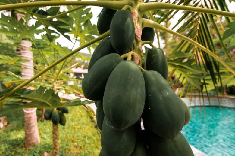 keemala fruit