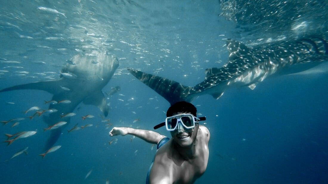 whale sharks tourist