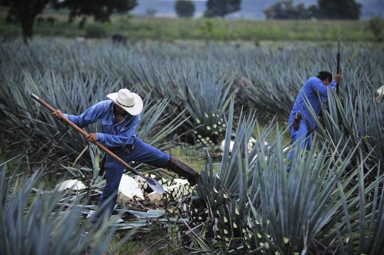 Tequila Farm Mexico