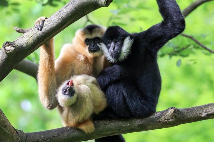 wild animals in china