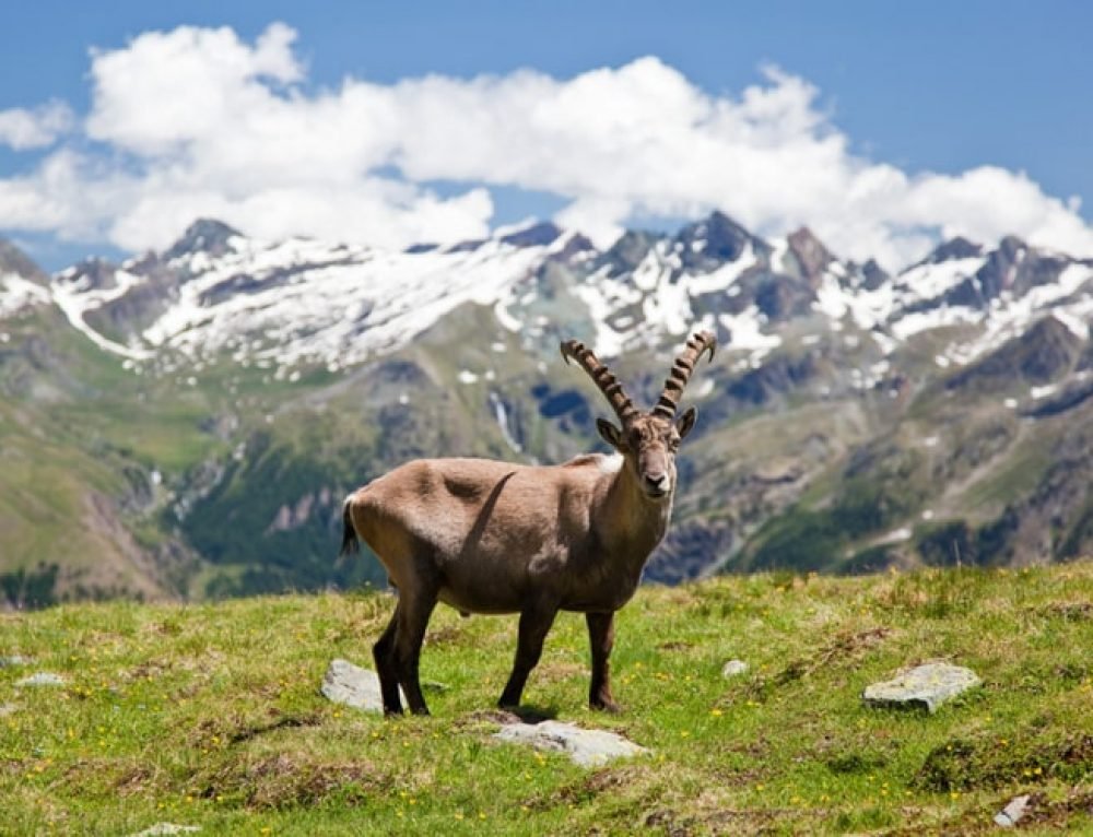 21 Wild Animals in Italy