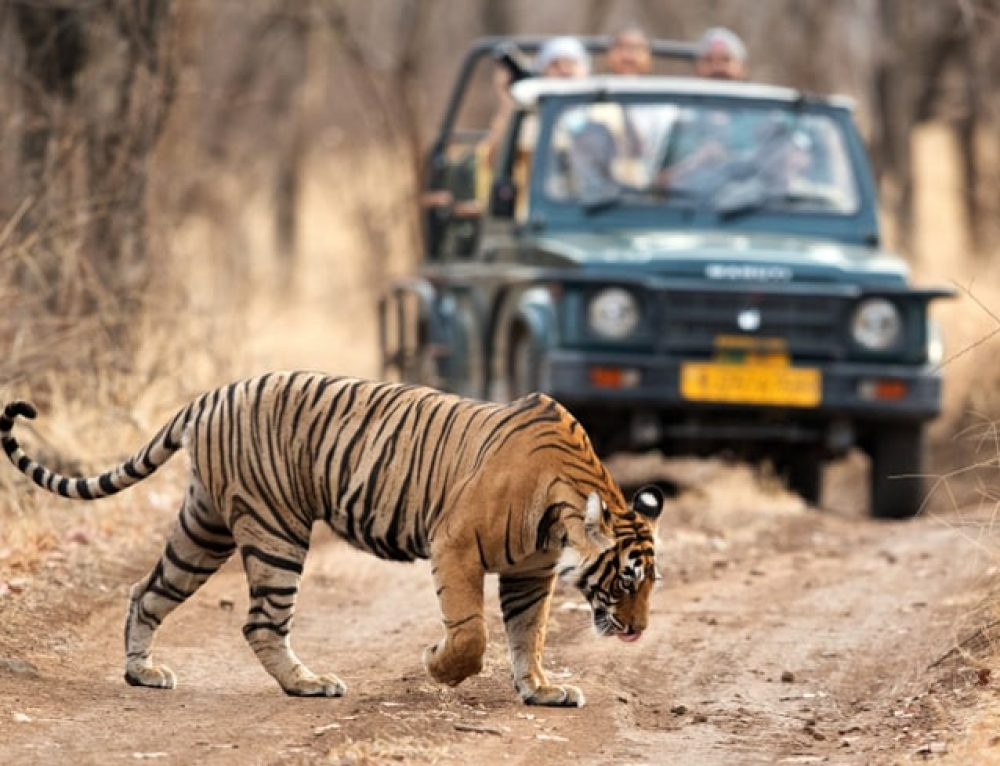 21 Wild Animals in India