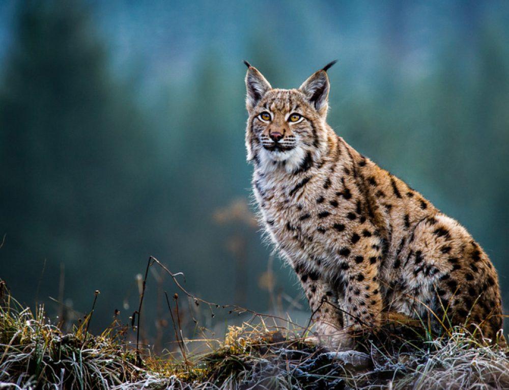 21 Wild Animals in France