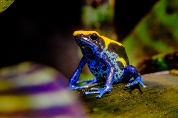 animals in brazil