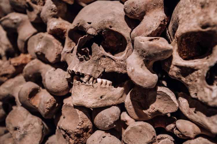 skulls with teeth
