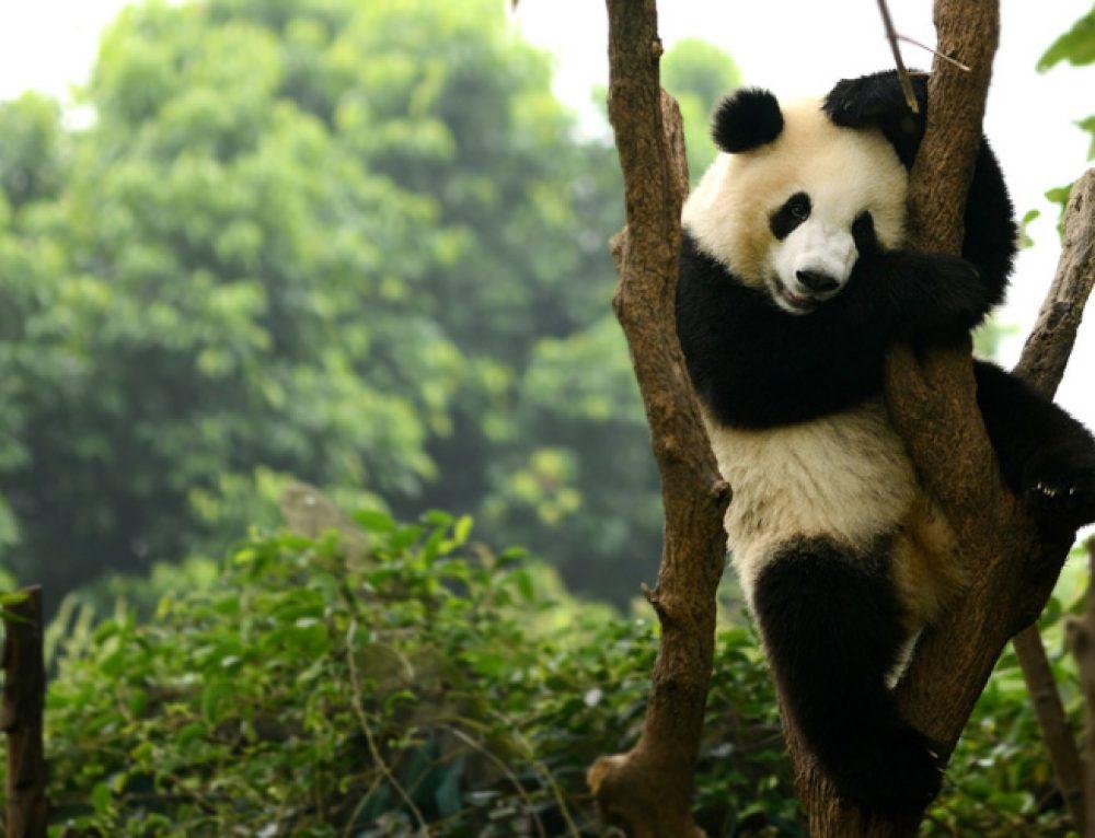 21 Wild Animals in China