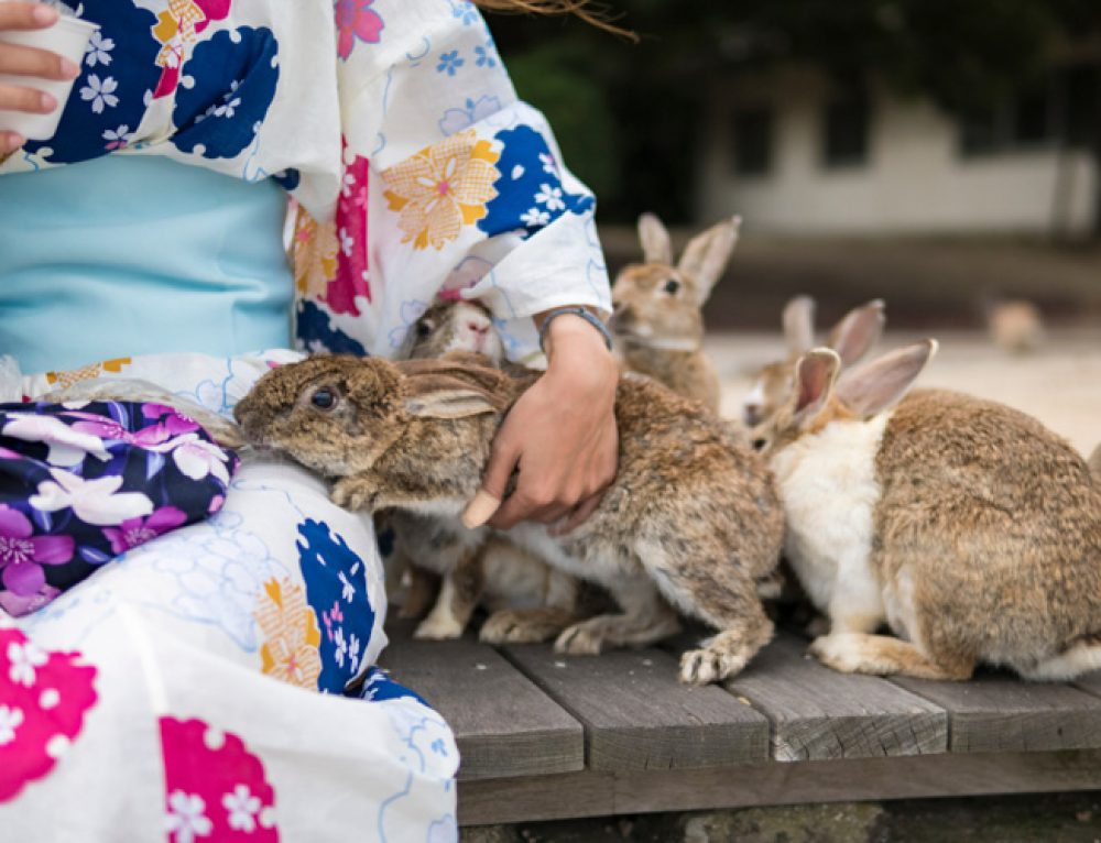 Visiting Okunoshima – My Experience of the Rabbit Island
