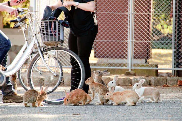 rabbit island bunnies