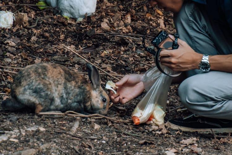 tourist feeding rabbit