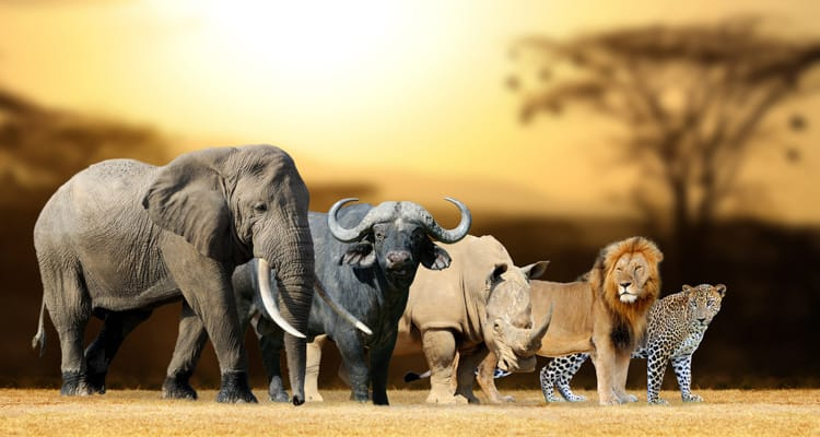 big five south africa