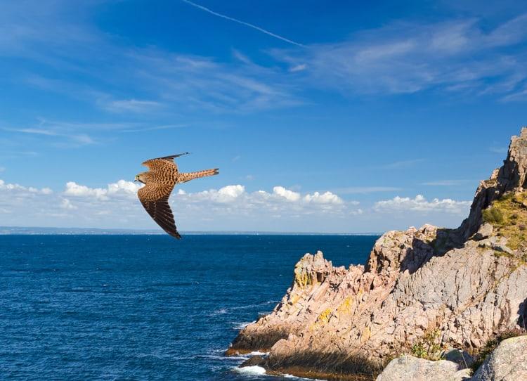 kullaberg fågelskådning