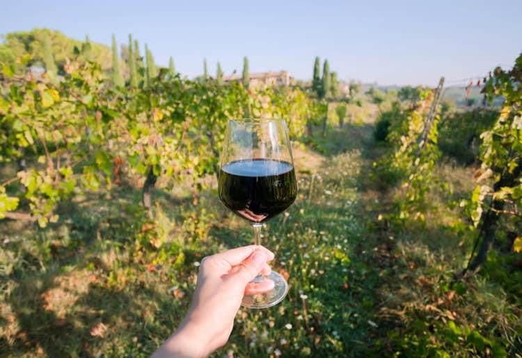 Vinprovning i Toscana